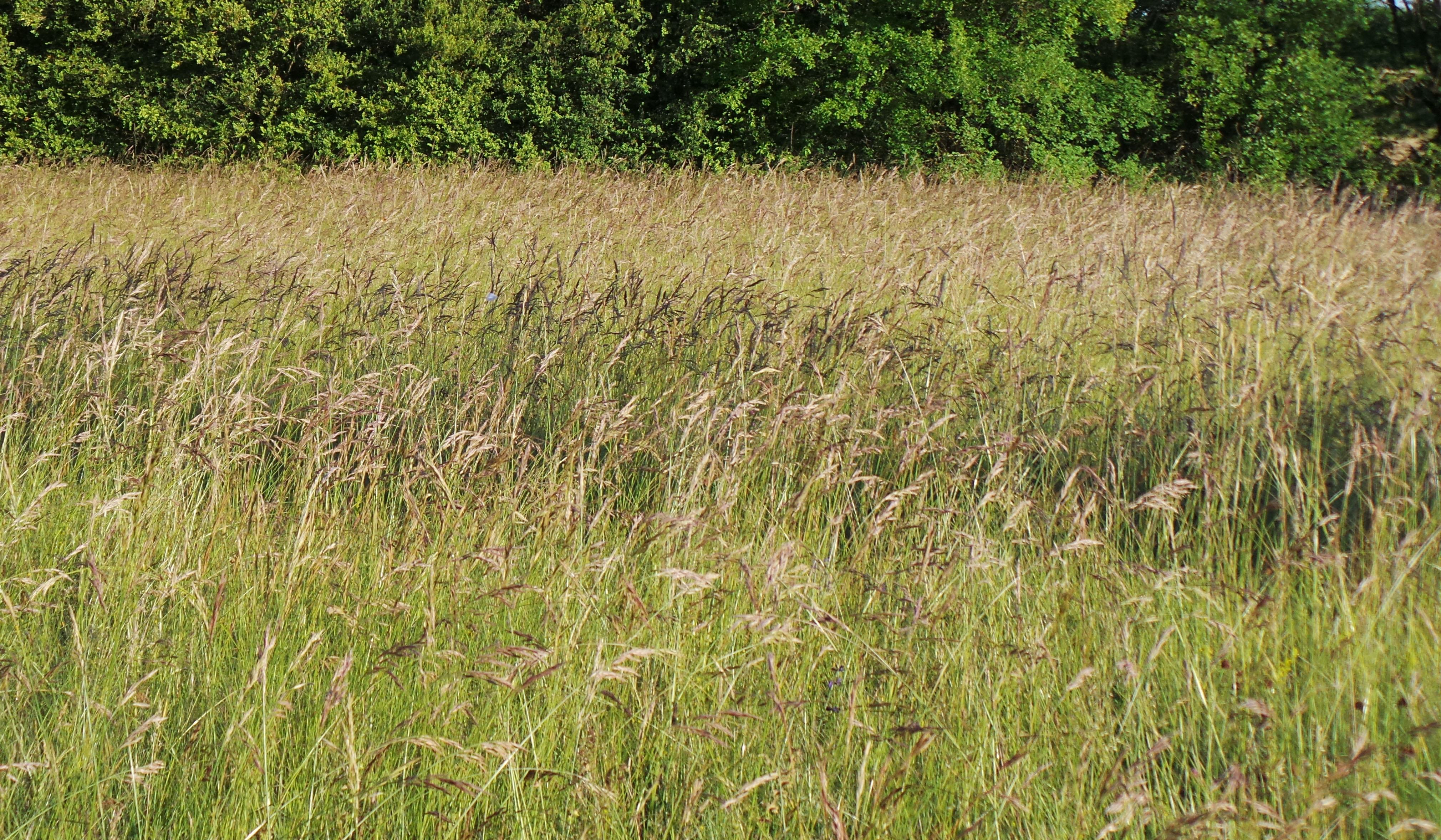 les hautes herbes le blog notes de michel desmoulin